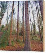 Not Sequoia Wood Print