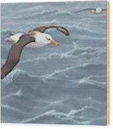 Ocean Flight Seabirds By Alan M Hunt Wood Print