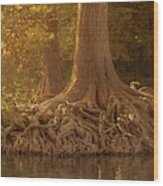 Old Cypress Tree Roots Wood Print