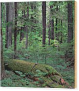 Old Growth Forest Wood Print