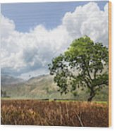 Old Scottish Farmlands Under The Clouds Wood Print
