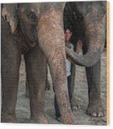One Man, Two Elephants Wood Print