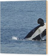 One Orca Leaping Wood Print