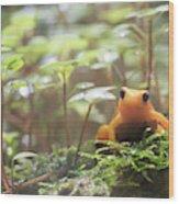Orange Frog. Wood Print