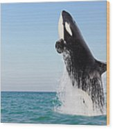 Orca Jumping Out Of Water Wood Print
