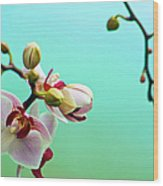 Orchids Out For A Breath Of Fresh Air Wood Print