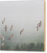 Oregon Coast Pelicans Wood Print