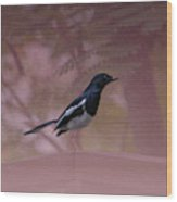 Oriental Magpie-robin With Texture Wood Print