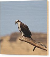 Osprey Waiting For Fish Wood Print