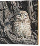 Owl In A Tree Wood Print