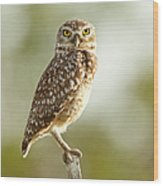 Owl On Blurred Background Wood Print