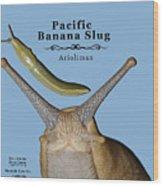 Pacific Banana Slug Wood Print