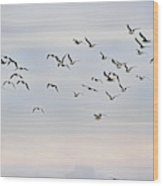 Pacific Ocean Sky With Sea Gull Wood Print