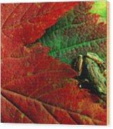 Pacific Tree Frog Hyla Regilla On Maple Wood Print