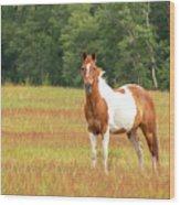 Paint Horse In Meadow Wood Print