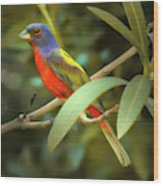 Painted Bunting Male Wood Print