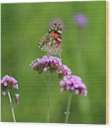 Painted Lady Butterfly Beauty Wood Print