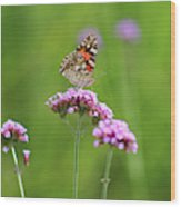 Painted Lady Butterfly In Green Field Wood Print