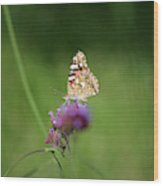 Painted Lady Butterfly In Shadows Wood Print