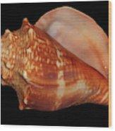 Painted Shell No. 9 Wood Print