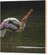 Painted Stork Wood Print