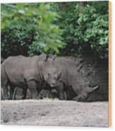 Pair Of Rhinos Standing In The Shade Of Trees Wood Print