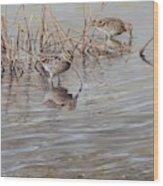 Pair Of Snipe By Alan M Hunt Wood Print