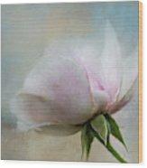 Pale Summer Rose Wood Print