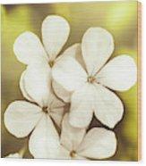 Pale Wildflowers Wood Print