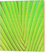 Palms And Fronds - Hawaii Wood Print