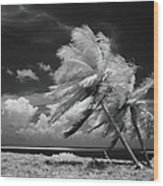 Palm Trees Blowing In Wind Wood Print