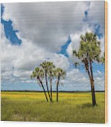 Palm Trees In The Field Of Coreopsis Wood Print