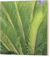 Palms Up Wood Print