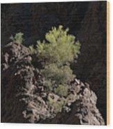 Palo Verde Spotlight-sq Wood Print
