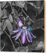 Passion Flower Only Alt Wood Print