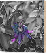 Passion Flower Only Wood Print