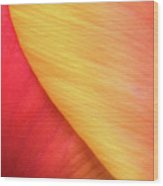 Pastel Curve  Wood Print
