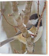 Peaceful Winter Chickadee  Wood Print