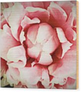 Peach Peony Wood Print