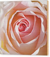 Soft As A Rose Wood Print