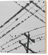 Perched Murmuration Wood Print