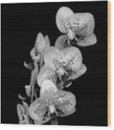 Phalaenopsis Orchids Black And White Wood Print