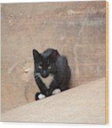 Pharaoh Cat Wood Print