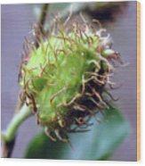 Photography Macro Shot Of A Beechnut Wood Print
