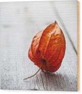 Physalis Alkekengi On Wood Wood Print
