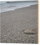 Pier Seashell Wood Print