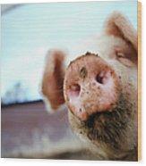 Pig Wood Print