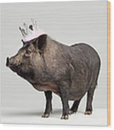 Pig With Toy Crown On Head, Studio Shot Wood Print