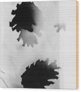 Pine Cones Monochrome Photogram White Background  Wood Print