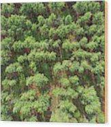 Pine Rows Aerial 2x1 Wood Print